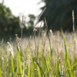 Flower grass impact sunlight. — Stock Photo #39485115