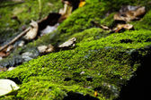 MOSS. On the stone — Stock Photo