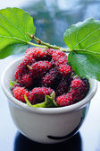 Mulberry fruit. — Stock Photo