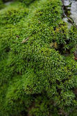 Moss in the rain forest in botanical garden, Southern Thailand. — Stock Photo