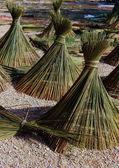 árboles para la cesta — Foto de Stock