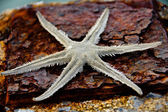 Global warming until dried starfish died. — Stock Photo