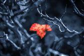 Orange maple leaves And twigs — Stok fotoğraf
