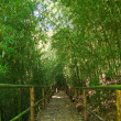 Natural corridors of bamboo forest. — Stock Photo