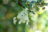 Wildflowers White — Stock Photo