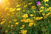 Yellow flowers in the garden — Stock Photo