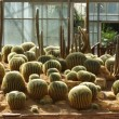 Stock Photo: Cactus in Botanical gardens