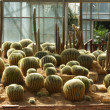Cactus in Botanical gardens — Stockfoto #41435379