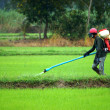 Farmers were spraying pesticides in rice fields. — Stock Photo