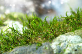 Moss on old wood — Stock Photo