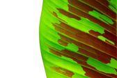 Banana leaves — Stock Photo
