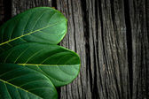 Green leaves on the old wooden background — Stock Photo