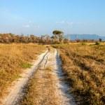 ������, ������: Savanna grasslands and forest golden leaves