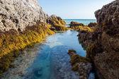 Rocks and seaweed (Sargassum sp.), Phang Nga - Thailand. — Foto Stock
