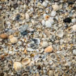 Background from sand and shells — Stock Photo