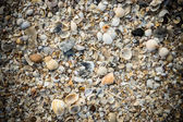 Background from sand and shells — Stockfoto