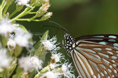 Butterfly on a white flower — Stock Photo