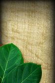 Blätter auf dem Stoff-Hintergrund. — Stockfoto