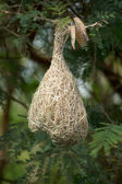 Bird nest at a branch of the tree — Stock Photo