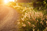 Wild grass in sunset counterlight at country road. — Stock Photo