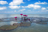 Pink waterlily flower and blue sky with cloud over the lake.. (L — Stock Photo