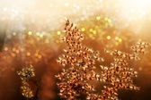 Wild grass in sunset counterlight at country road. — Stock fotografie