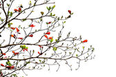 Tropical almond Tree after the autumn and new leaves are growing — Stock Photo