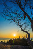 Sunset sky and dead tree at the lake. — Stock Photo