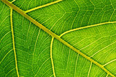 Detail of a leaf fibers — Stock Photo