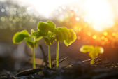 Green sprout growing from seed — Stock Photo