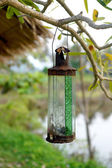 Old glass lamps — Стоковое фото
