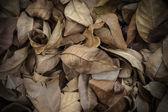 коричневый опавшие листья на земле. — Стоковое фото