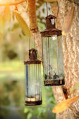 Vintage old glass lamps on the tree. — Foto Stock
