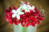 Rangoon creeper flower — Stock Photo