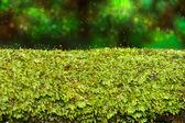 Bark and moss — Stock Photo