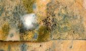 Mold on bread — Stock Photo