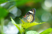 Butterfly leaf with blurred background. — Foto de Stock