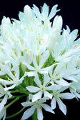 De witte bloemboeket — Stockfoto