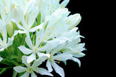 The White Flower Bouquet — Stock Photo