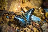Motyl na ziemi — Zdjęcie stockowe