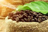 Roasted coffee beans and leaves — Foto de Stock