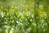 Fresh morning dew on spring grass, natural green light backgroun — Stock Photo