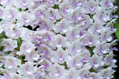 Bouquet of white and pink orchids. — Stock Photo