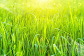 Green grass and light. — Stock Photo