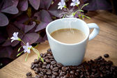 Coffee and beans on a wood background. — Stock Photo