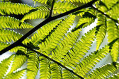 Ferns in rain forest — Stock Photo