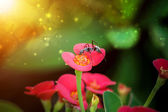 Black Ant on the Euphorbia milli Desmoul — Stock Photo