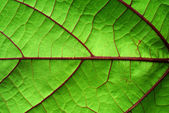 Detail of a leaf fibers — Stock Photo