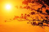 Tree branches on orange background — Stock Photo