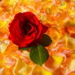 Rose — Stock Photo #39620181